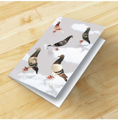 Pigeon Colours Blank Card